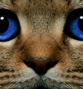 Передержка кошек, котиков в хороших условиях