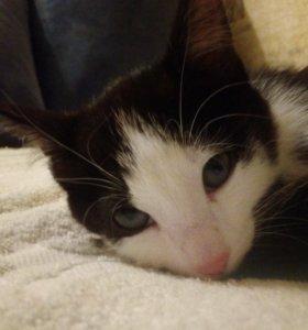 Котёнок от кошки крыселовки