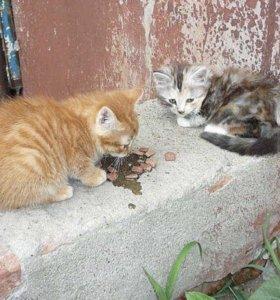Котята маличик и девоска