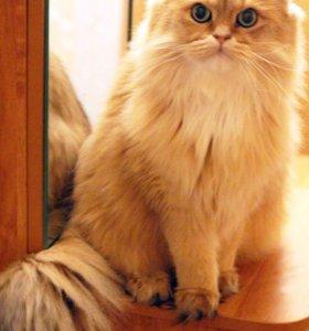 Передержка кошек и котят )
