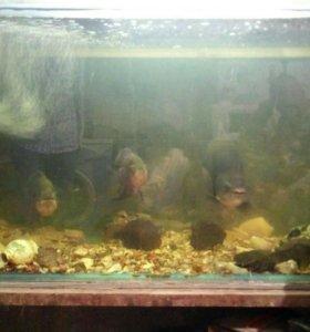 Аквариумы для разведения рыб. От 500 до 1000л.