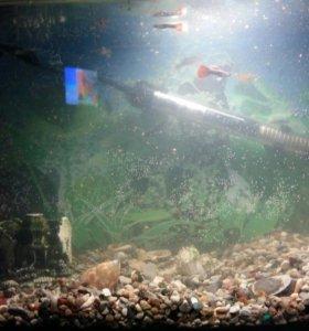 Аквариум на 25 л с рыбками