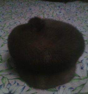 шапка меховая(песец)