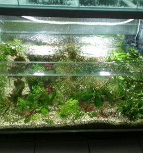 Террариумы, аквариумы любых размеров.