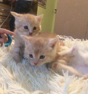 Красивые милые котята