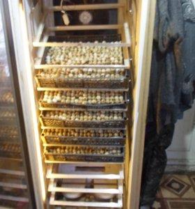 Инкубатор на 900 куриных яиц.