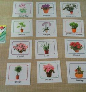 Карточки комнатные растения