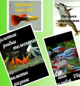 живность аквариумная в большом ассортименте