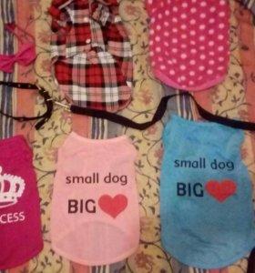 Одежда для собачек.