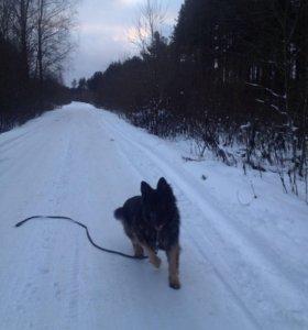 Дрессировка и воспитание собак