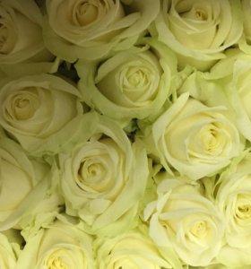 Розы розовые и белые спб