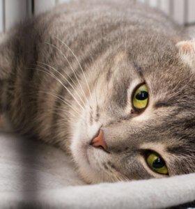 Добродушный кот Серёжа