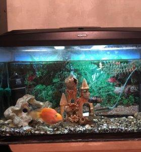Аквариум aquael на 120 литров