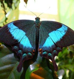 Тропические Живые Бабочки из Непал Орхидея