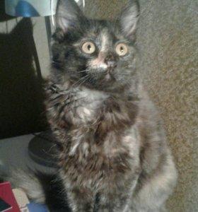 Кошечка (4 месяца)