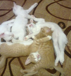 Котята в добрые руки)