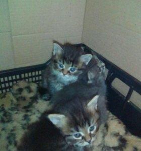 Милые котята от кошки-мышеловки.