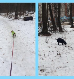 Выгул собак!