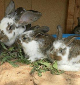 Кроличей навоз