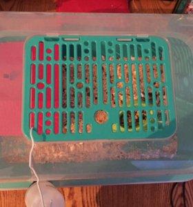 Клетка-аквариум для хомячка или других грызунов