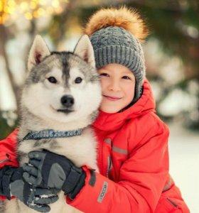 Собаки Хаски для фотосессий