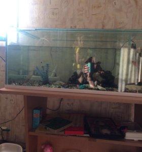 Продам аквариум с несколькими рыбками и торг