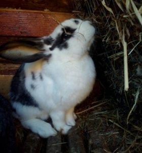 Кролики от 2-4мес.