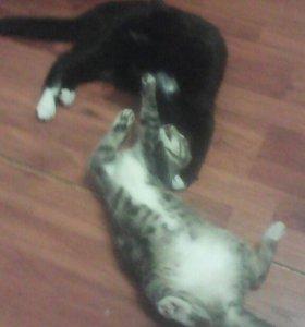 черный молодой кот