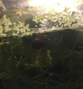 Улитки катушки