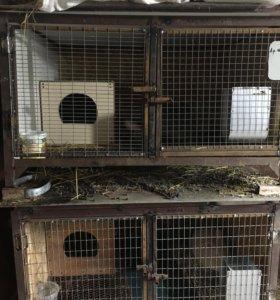 Клетки для кроликов и нутрий.