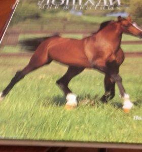 Красочные книги лошади