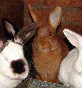 Кролики разных продуктивных пород