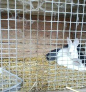 Кролики от 300 руб