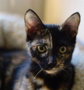 Котенок 3 месяца девочка