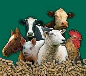 Зерно, комбикорм,вега,убойный,евсино