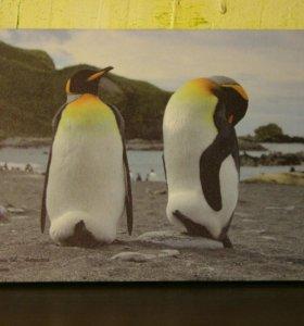 Фото-холсты из Антарктиды
