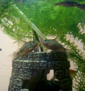 Аквариум круглый с рыбками