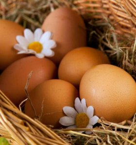 Яйца молодых курочек десяток яиц