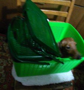переноска для мелкой собачки, кошки, кролика
