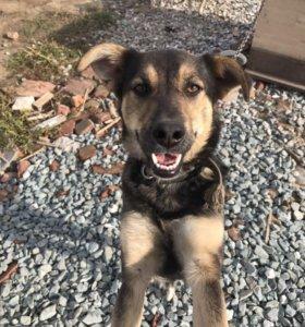 Солнечная собака в добрые руки