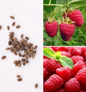 Сладкие сочные Малины - семена 50