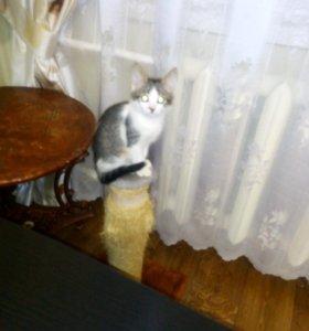 Приют для кошечек,в домашних условиях