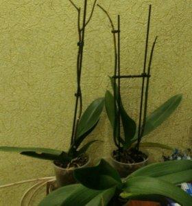 Орхидеи отцветайки