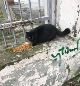 Чёрная кошка 6 мес в добрые руки