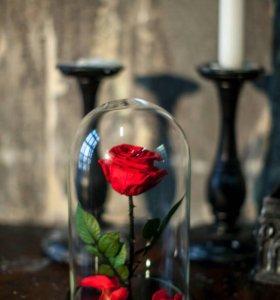 Живая роза в колбе,все цвета в наличии!