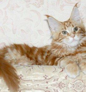 Крупные кошки с рысьими кисточками