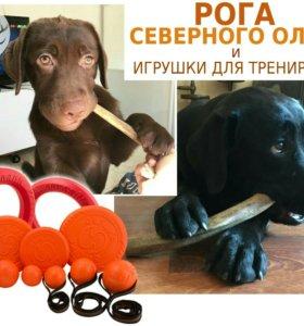 Рога северного оленя для собак