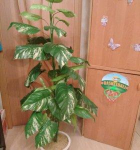 Искуственное растение Диффенбахия