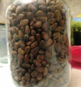 Орехи кедровые из Сибири