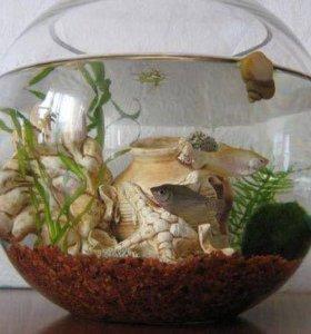 Возьму аквариум , можно и рыбок